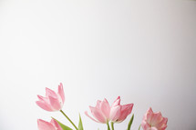 pink tulips , easter, flowers