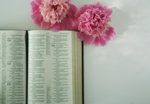 open Bible and pink flowers