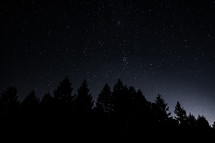 stars in the night sky above pine trees
