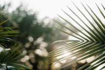 palm fronds in sunlight