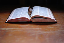 fall leaves on an open Bible