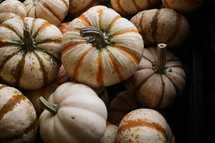 white striped pumpkins