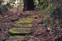 moss on a stone path