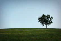 an isolated tree on a green meadow
