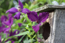 wooden bird house and purple flowers