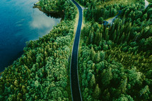 highway through a forest