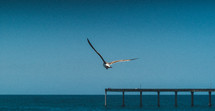 seagull and pier
