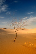 tree growing in sand dunes