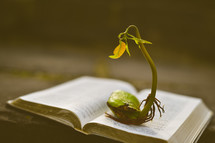 a sprout on the pages of a Bible