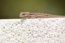 a lizard on a wall