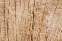 tall fuzzy grass