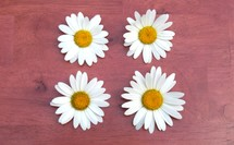 daisies on a wood table