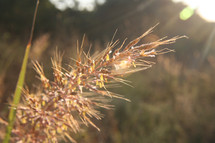 tall grass and sunlight