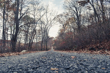 gravel road through a forest