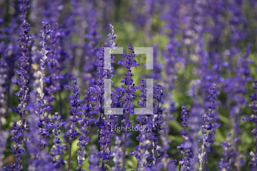 purple wild flowers flowers