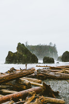 trees and driftwood washed up on a shore