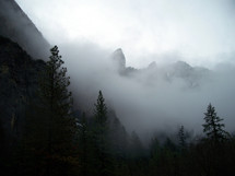 A gray morning fog surrounds the pine trees and canyons at Yosemite National Park in Central California on a cold morning in February.