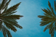 Palm fronds in a tropical sky.