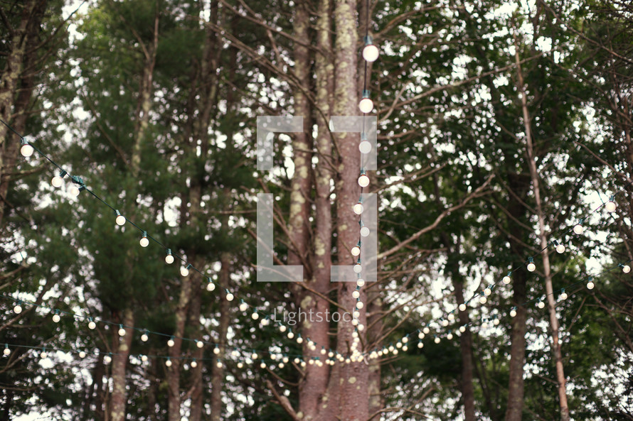 strand of lights hanging in a tree