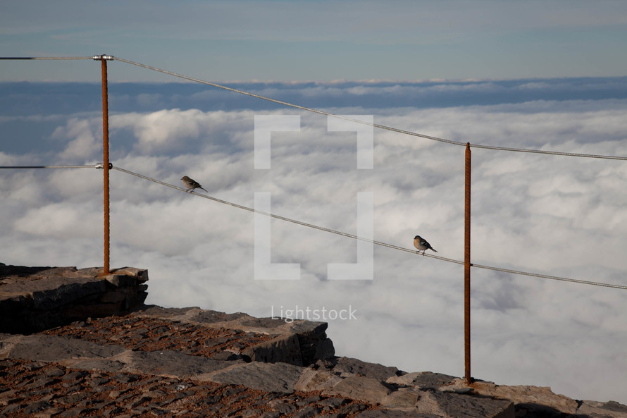 birds perched on a fence above a fog filled valley