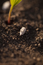 seed in the soil