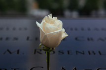 a rose on the 9/11 memorial