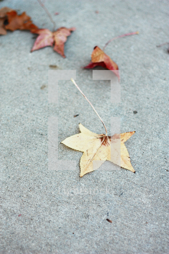 fall leaves on a sidewalk