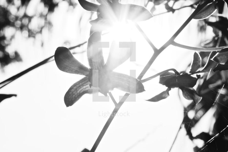 sunlight on an orchid flower