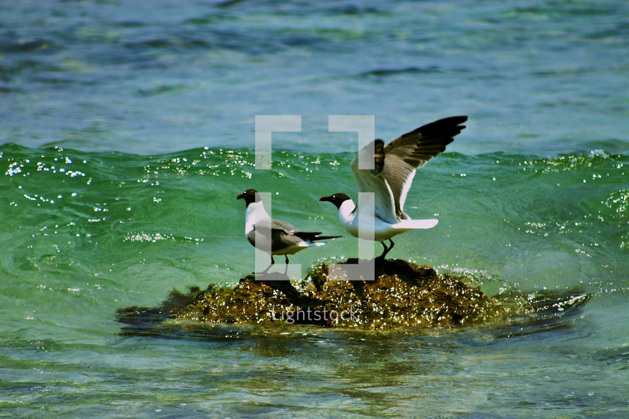 Seagulls on beach water rock