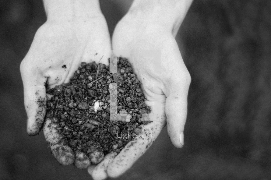 seeds in soil in cupped hands