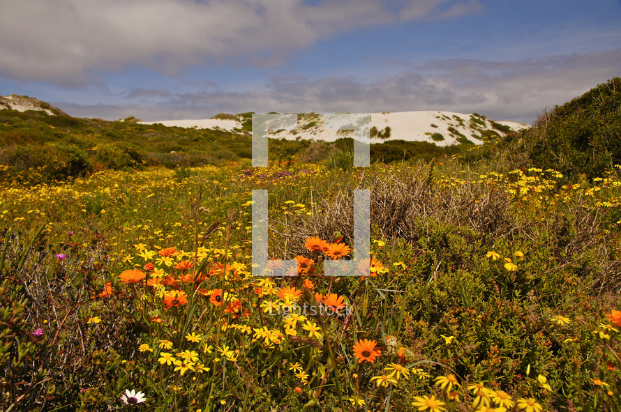Wildflowers in African bush on the edge of the edge