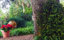 A tropical setting of palm trees, ferns and red and green canopy in a tropical garden.