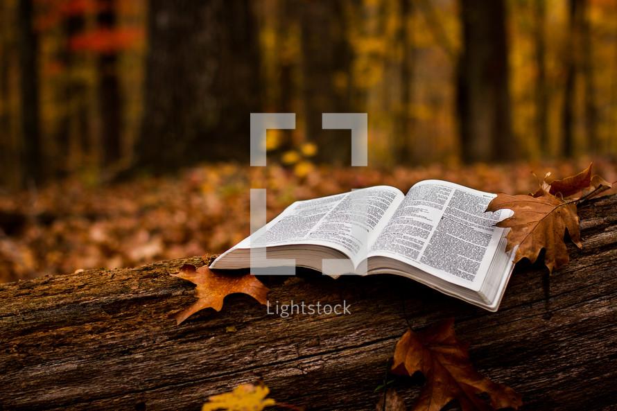 opened Bible on a fallen tree trunk