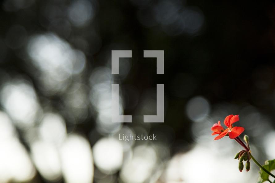 Orange wildflower