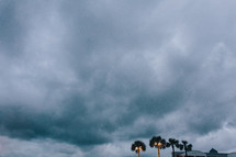 tops of palm trees and a cloudy sky