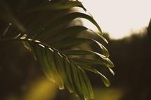 sunlight on a tropical plant leaf