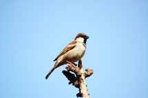 bird perched on a stick