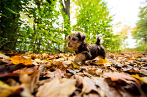 puppy in leaves