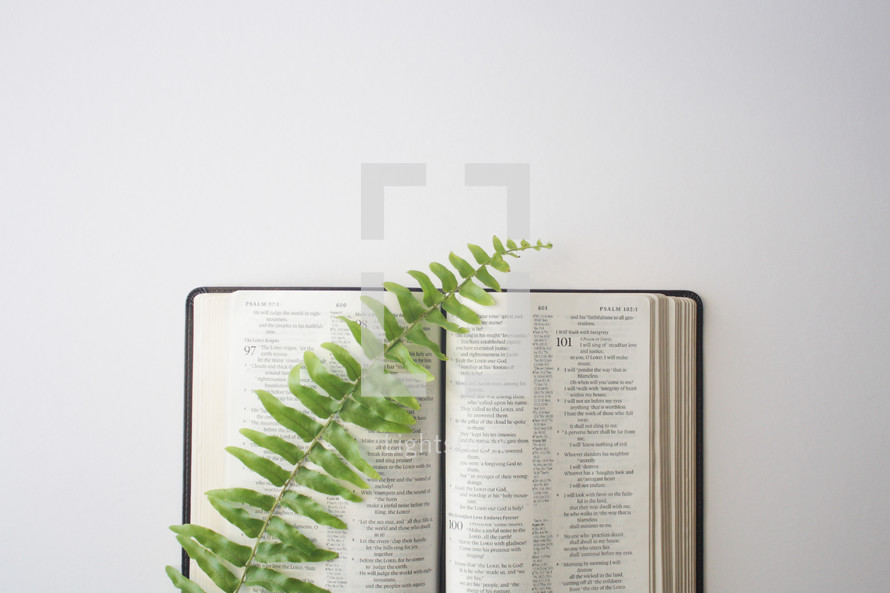 fern on the pages of an open Bible