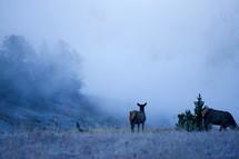 deer in a meadow