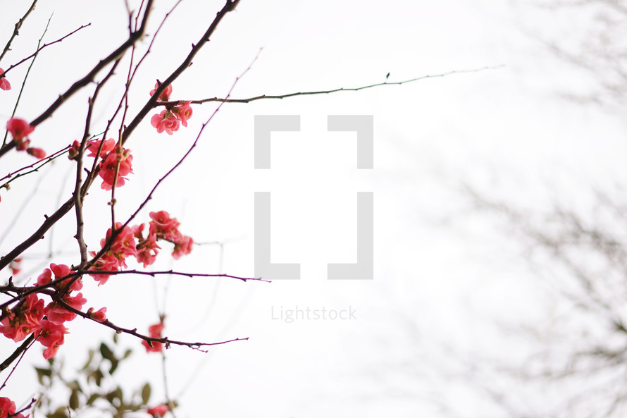 pink flowers on branches