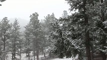 falling winter snow in a forest