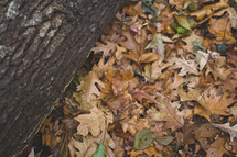 fall leaves and tree bark on a log
