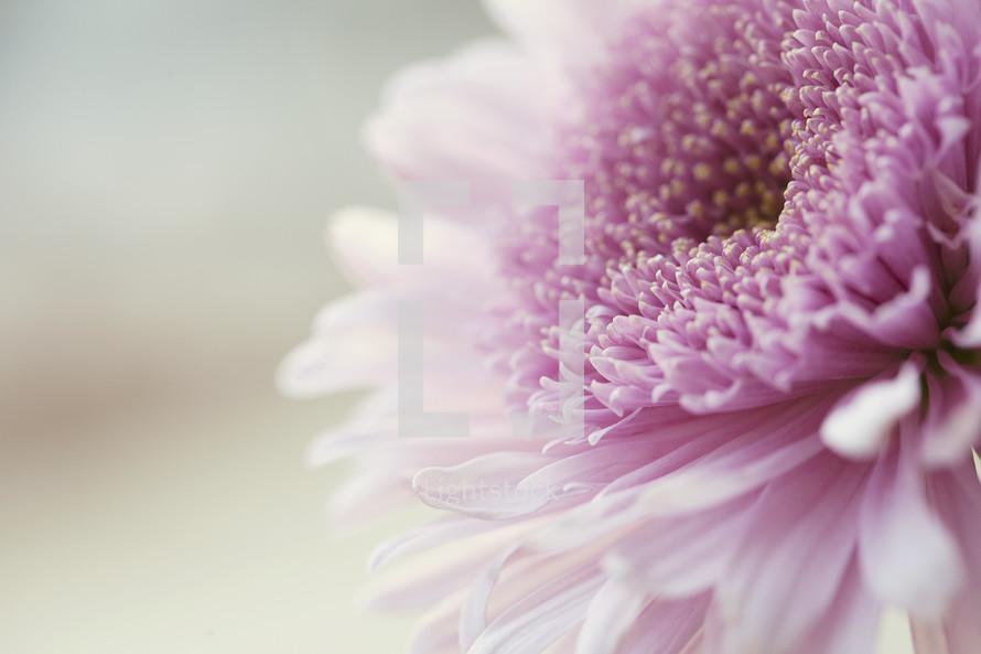 closeup of a pretty pink flower.