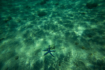 sea star under the water