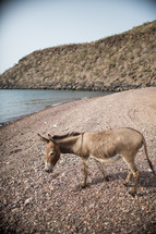 a donkey in gravel