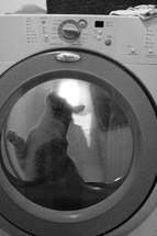 cat in a washing machine