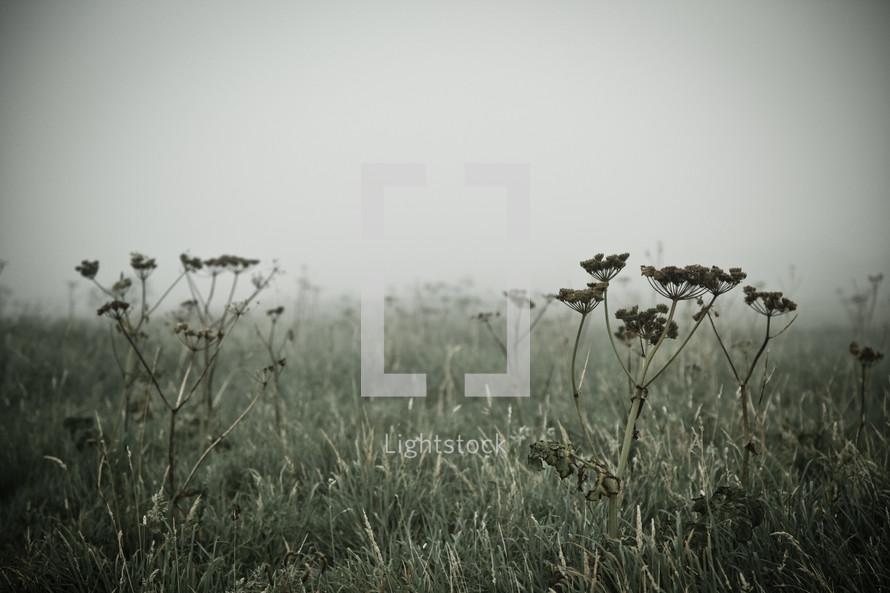 Wildflowers in grass field