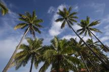 Tall palm trees.