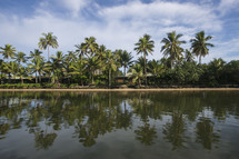 reflection of palm trees over topical water